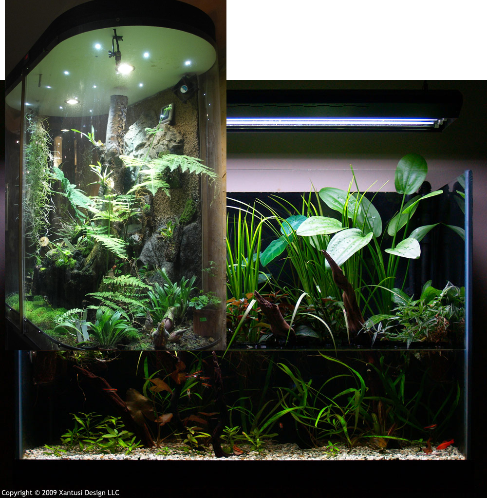 Thoughts plans and questions for a riparium aquarium for Fish tank terrarium