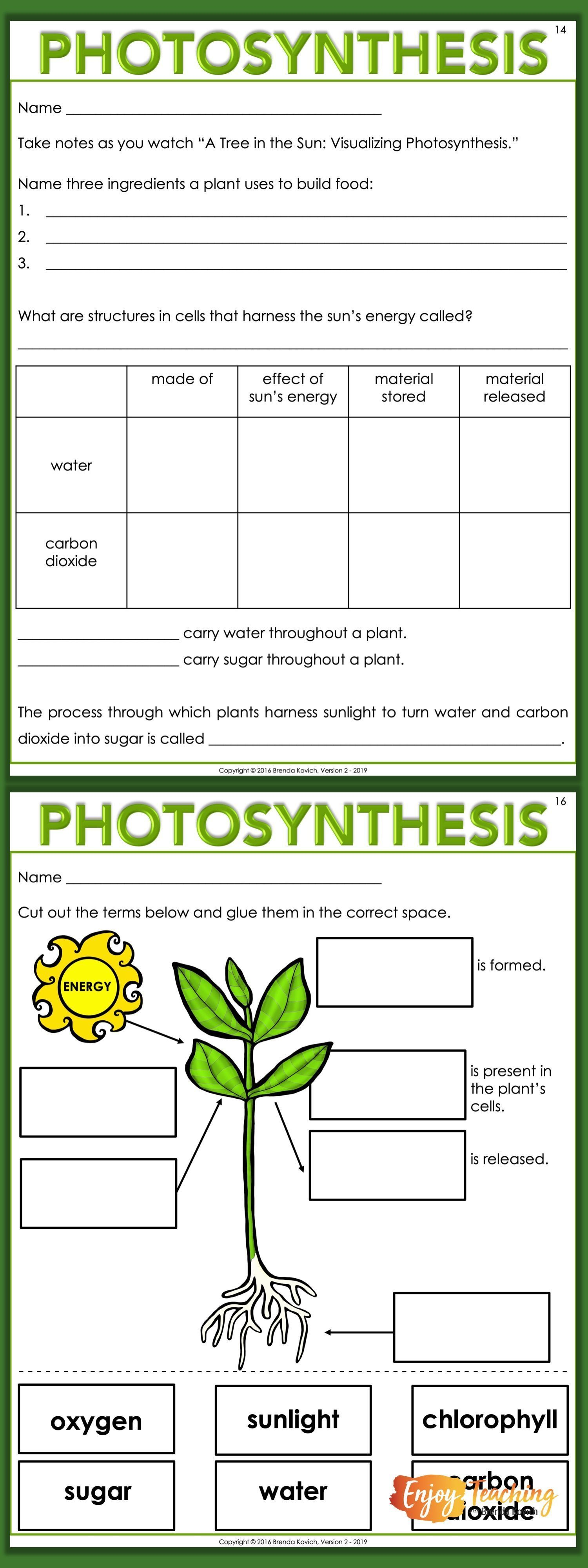 Nutrition Photosynthesis Worksheets Photosynthesis