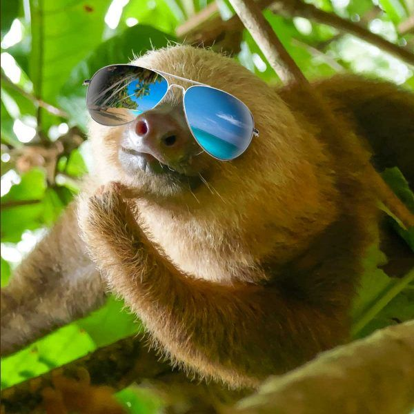 sloth with sunglasses chillin put a sloth on it sloth sloth