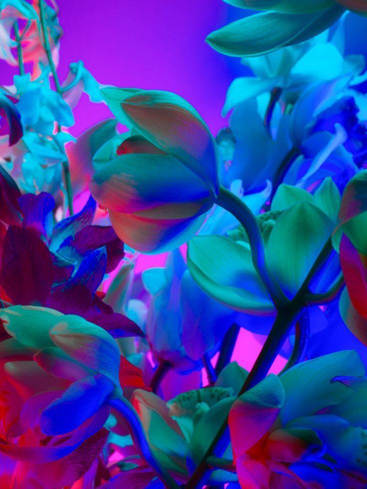 Flowers Interesting Colors Neon Flowers Neon Aesthetic Still