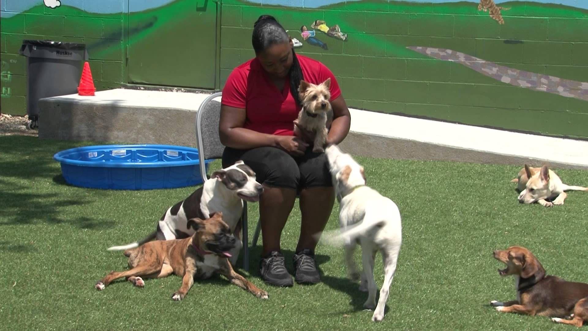 Just Happy Hounds Midtown Doggie Daycare Birmingham