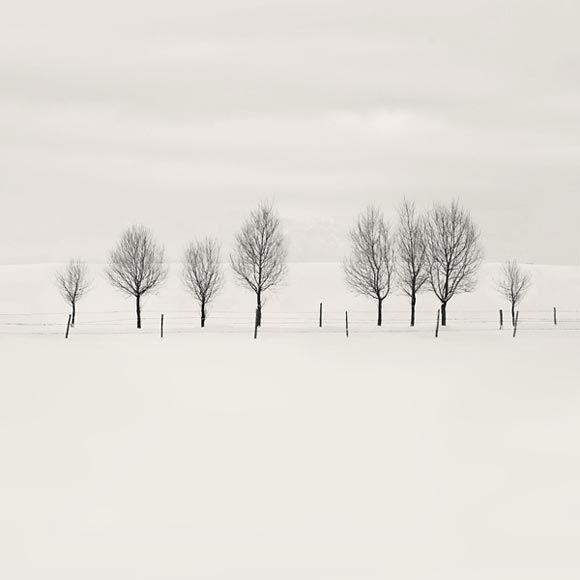 Stillness of winter