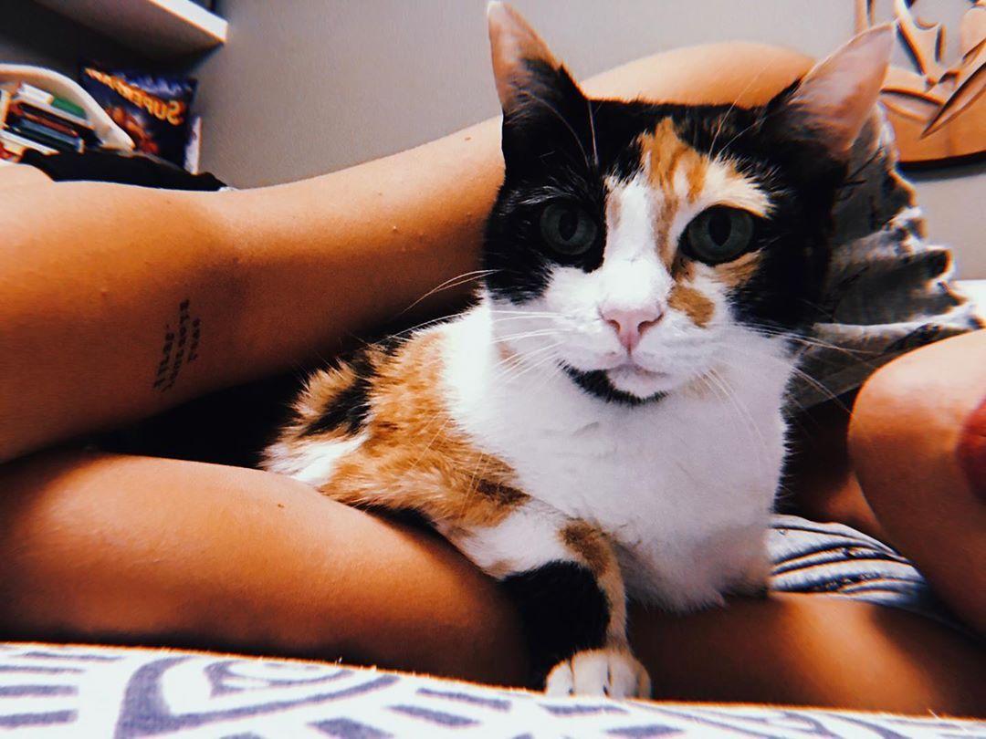 Tre secondi di amore 💕 . . . . . . . . . 🐱 #cat #cats #catsagram #toptags #catstagram #instagood #kitten #kitty #kittens #pet #pets #meong #neko #petstagram #petsagram #photooftheday #catsofinstagram #ilovemycat #instagramcats #kucing #catoftheday #lovecats #furry #sleeping #lovekittens #adorable #catlover #instacat