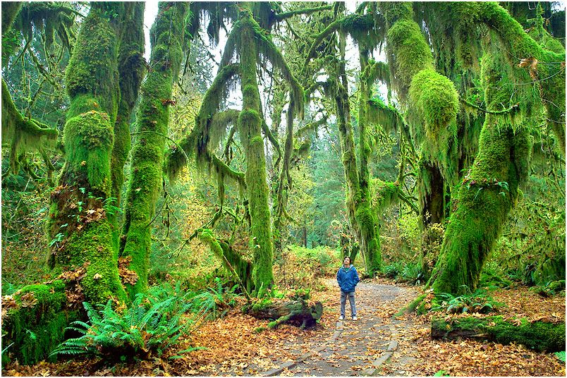 Hall Of Mosses National Park Google Search With Images