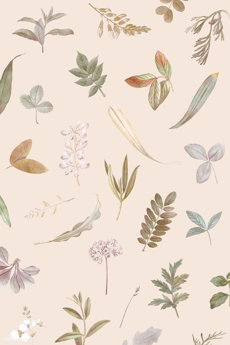 Download premium vector of Foliage pattern on beige background vector by Sasi about dried flowers, fall botanical, Flower phone wallpaper, autumn pattern, and autumn 1213652