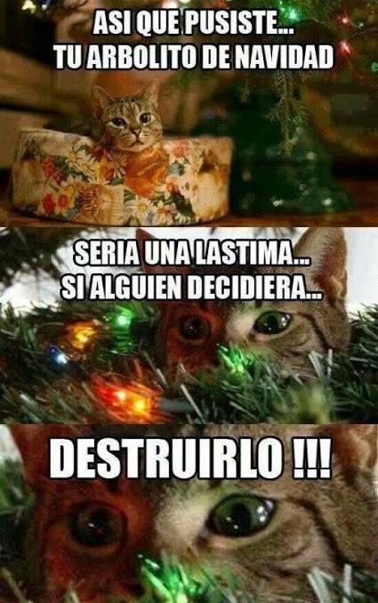 Pin By Rebecca Zachary On Memes Y Cosas Graciosas Christmas Memes Animal Memes Cat Memes