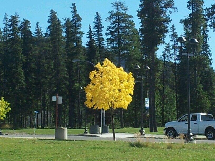 Beautiful signs of fall, British Columbia, Canada