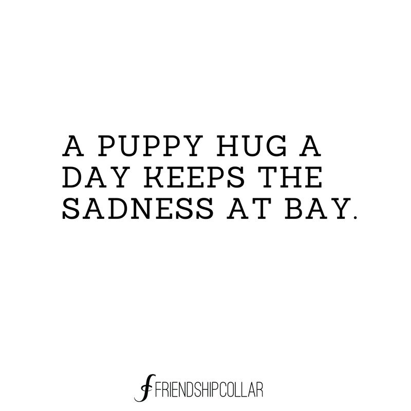 My Sweet Paris You Hug Me Every Morning Puppy Hug Best Quotes Life Quotes