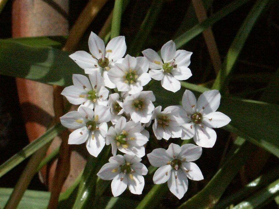 Snowdrop Flowers 2 675x506 Top 10 Flowers That Bloom In Winter Winter Flowers Bloom Flowers Last Longer