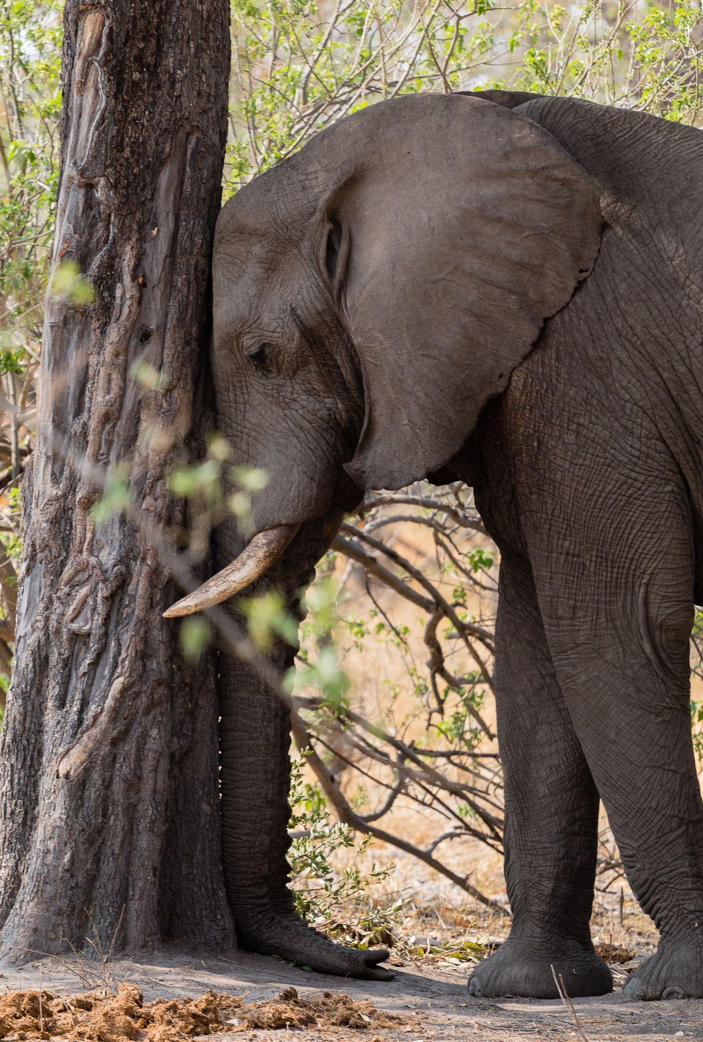 A Little Nap Elephant Susse Tiere Elefanten Tiere