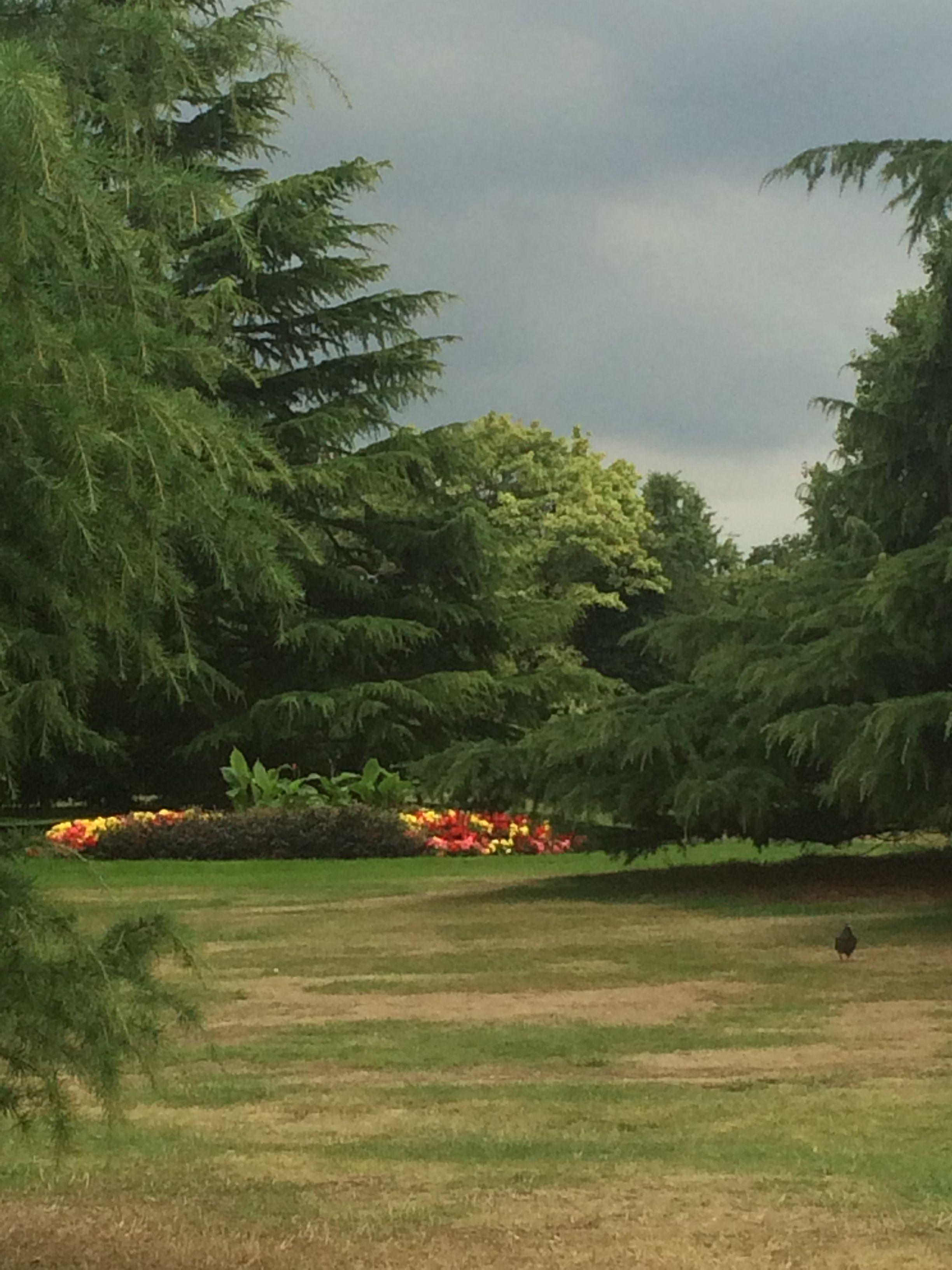 Flower garden royal Greenwich park blackheath London