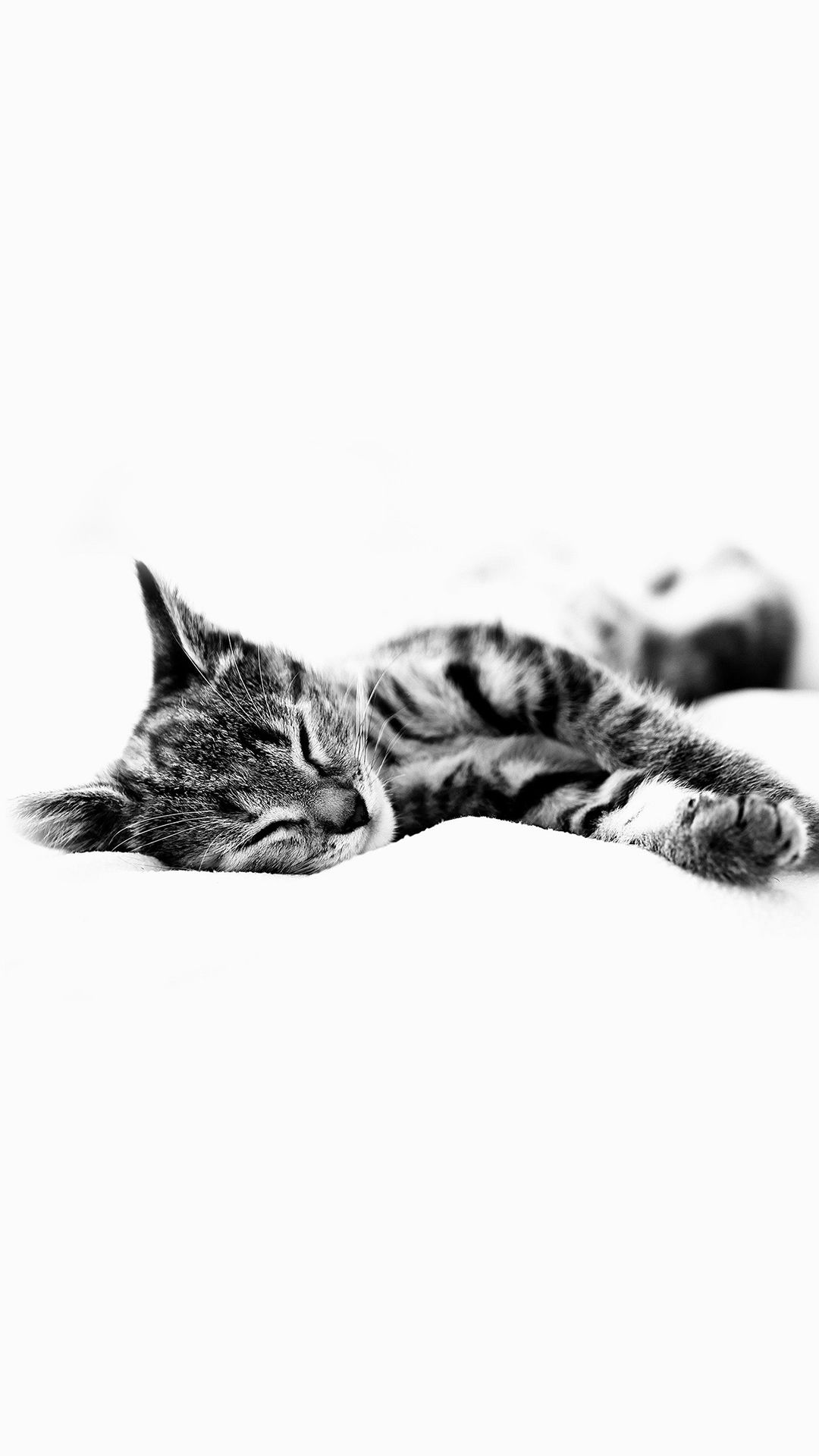 Sleepy Cat Kitten White Animal Iphone 6 Wallpaper Download Iphone Wallpapers Ipad Wallpapers One Stop Download Kitten Wallpaper Cat Background Cat Wallpaper