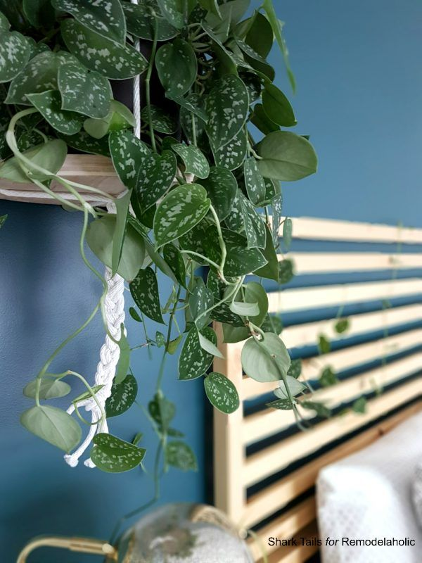 The Easiest DIY Hanging Planter in the