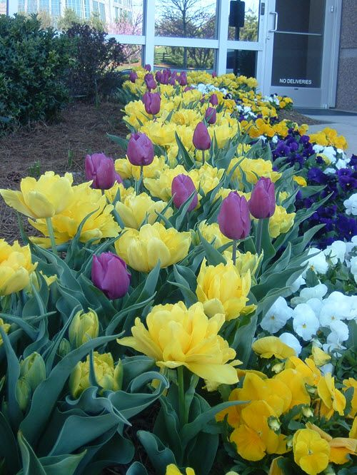 Can't Wait for the bulbs to bloom this Spring!