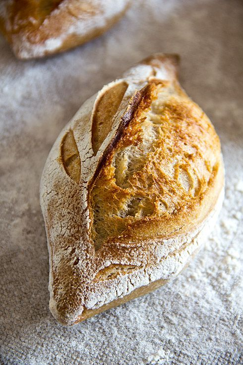 Rustikale Baguettebrötchen – Plötzblog – Selbst gutes Brot backen