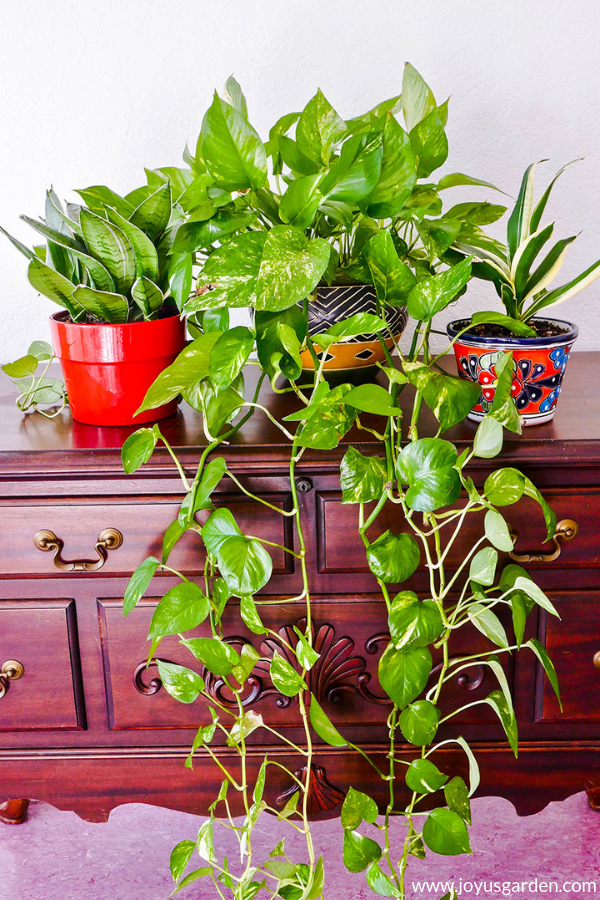 7 Easy Tabletop And Hanging Houseplants For Beginners 640 x 480
