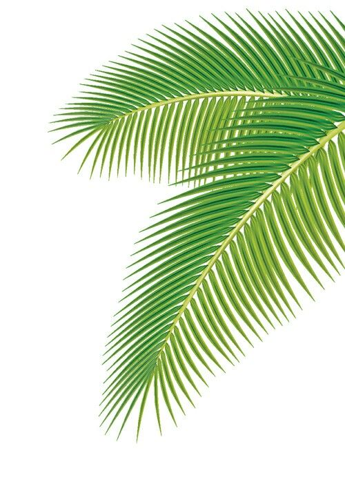 A Imprimer Palm Leaves Palm Trees Leaves Vector