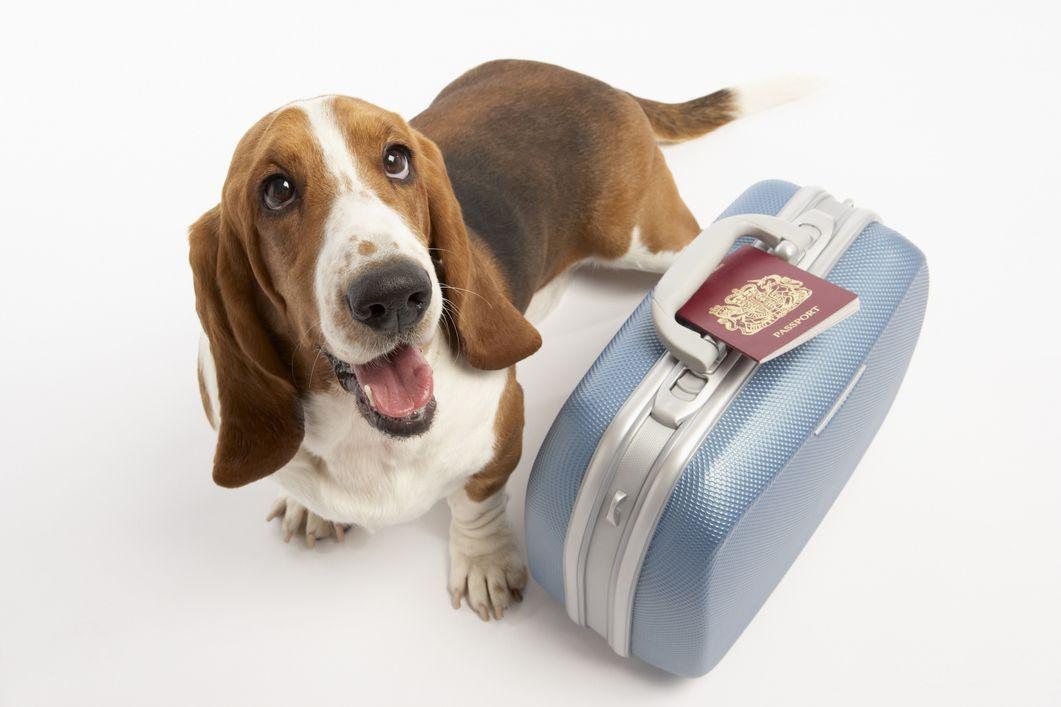 Cómo organizarse para viajar con mascotas Hotel para