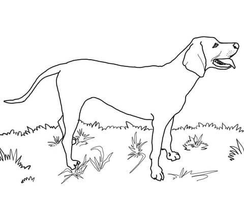 Redbone Coonhound Coloring Page Free Printable Coloring Page