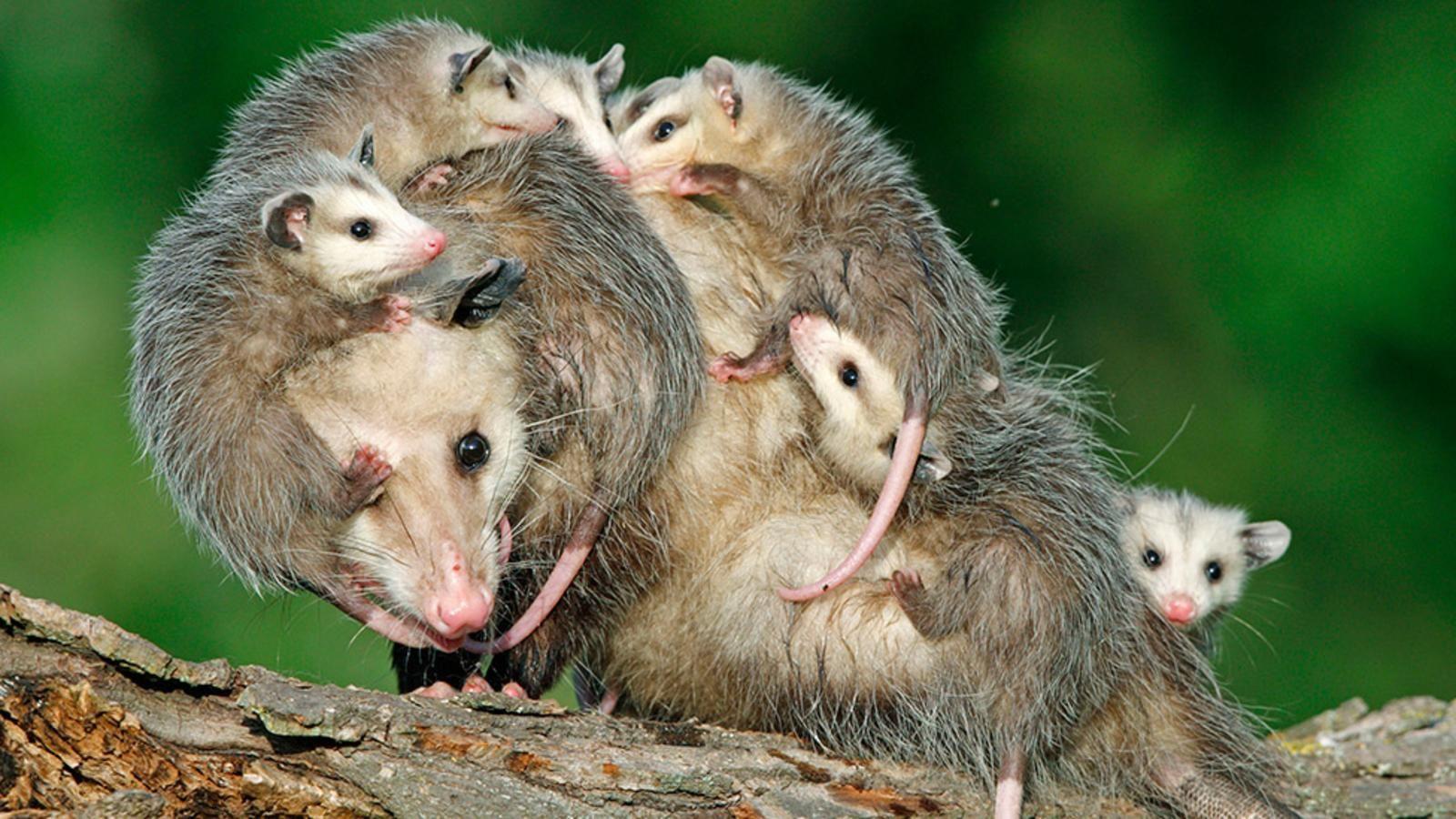 amazing mothers of the animal kingdom animal