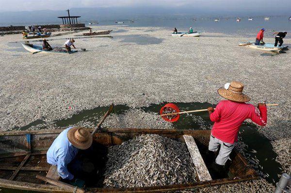 Muerte masiva de peces en laguna mexicana - Yahoo