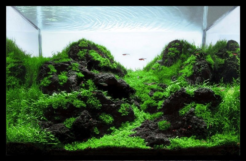 Perfect Aquascaping World Competition   Gallery