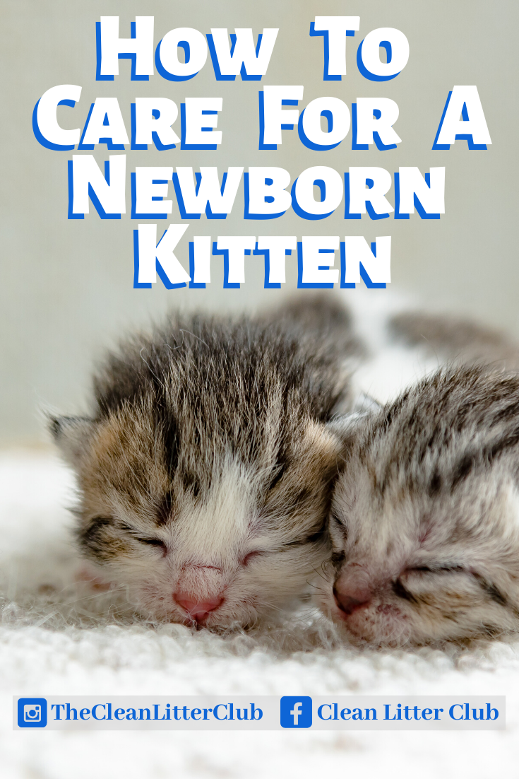 How To Care For A Newborn Kitten In 2020 Kitten Care Newborn Newborn Kittens Kitten