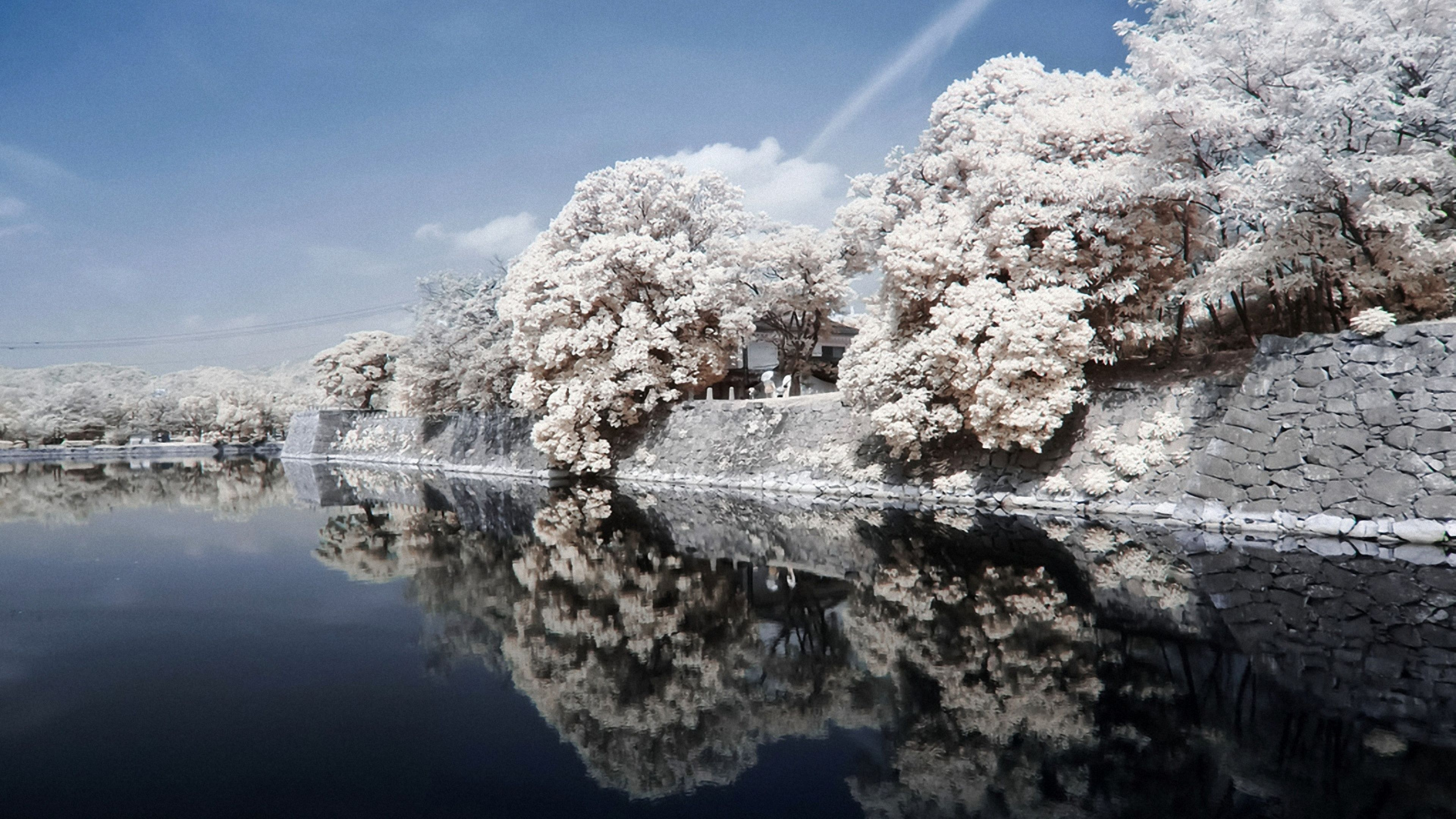 Japan 4k Wallpaper In 2020 Japan Landscape Tree Wallpaper Backgrounds Beautiful Photography Nature