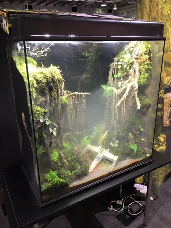 Saw this awesome Dagobah System themed frog terrarium - Saw This Awesome Dagobah System Themed Frog Terrarium Rando
