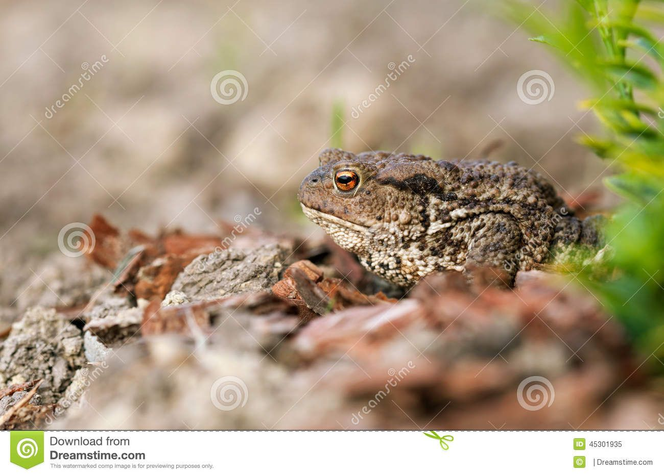 Frog Download From Over 26 Million High Quality Stock