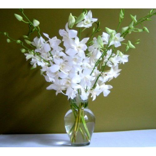 Fresh Flowers - White Dendrobium Orchids with Vase; 10 long stems with glass vase  Guaranteed to last at least 7 days from Just Orchids only  Shipped with water tubes to supply continuous hydration during shipping  Your personal message with flowers is available by clicking on gift options at Checkout  Shipped and delivered Monday through Saturday