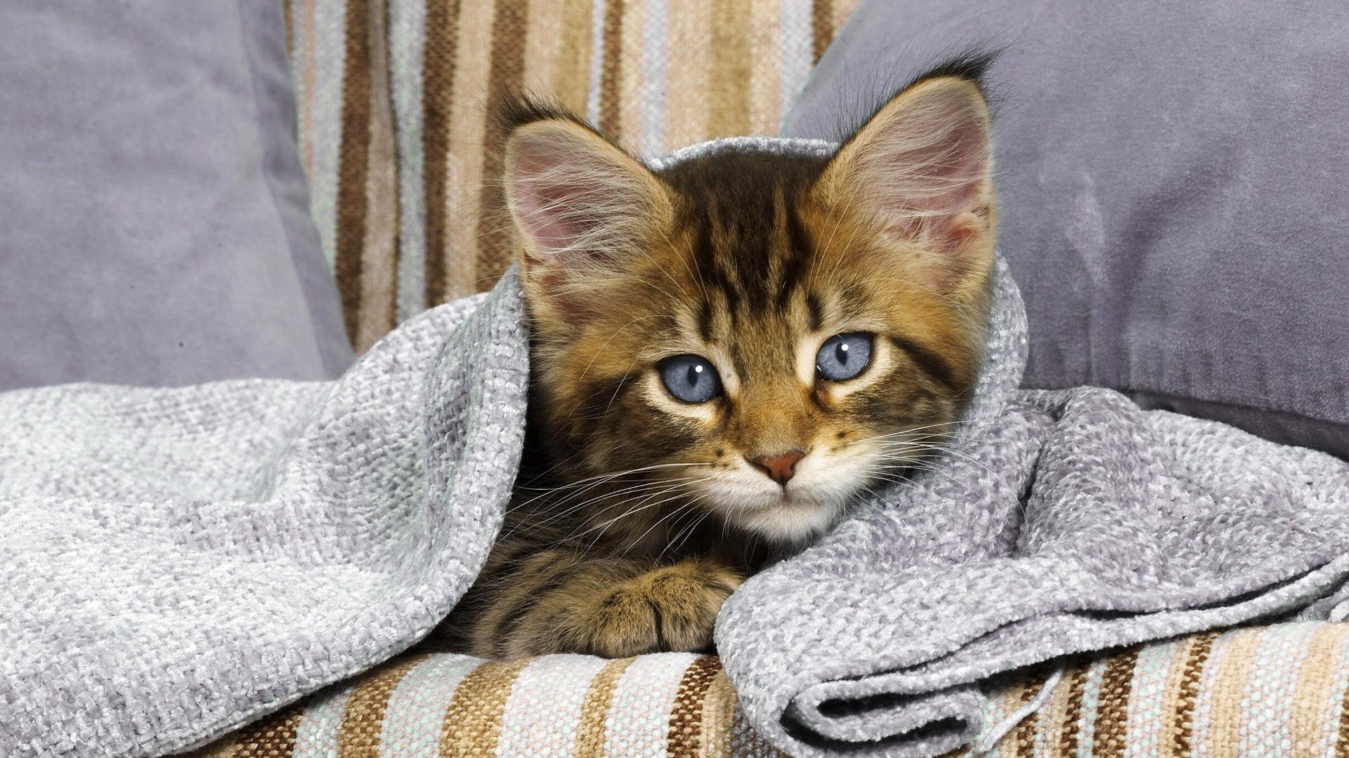 Cat Theme Background Images Eartha Murphy 1920x1080 Cats Cat Wallpaper Cat Cuddle