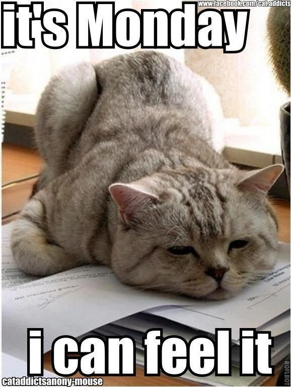 It S Monday Funnyanimalslol Funny Or Cute Pet Memes Funny Animals Cats Cute Animals