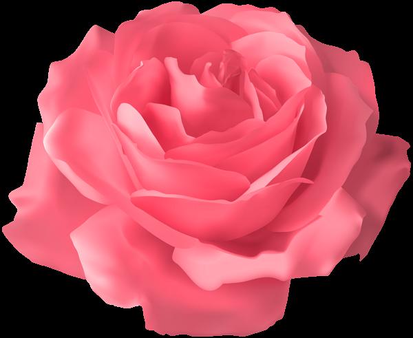 Soft Pink Rose Transparent PNG Clip Art Image