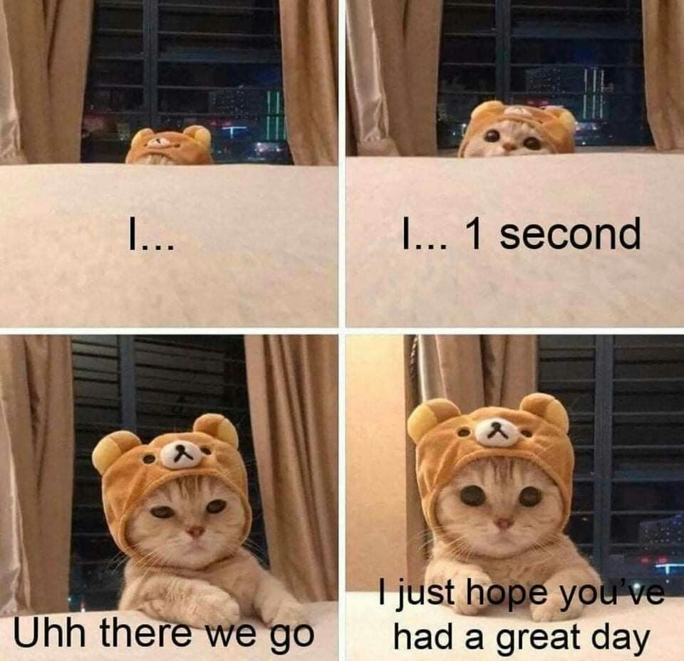 Cheezburger Facebook Aug 31 2020 Hope You Have A Great Day Cat In Costume Funny Animal Pictures Cute Funny Animals Funny Animals