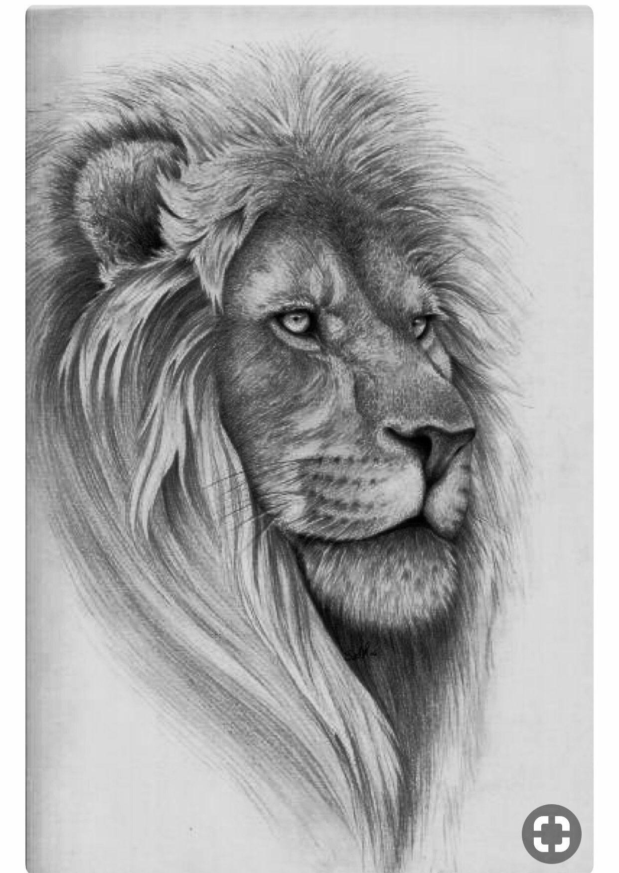 Lion B W Sketch Mane Shaped Like Heart Fotografia De Leao Desenho Realista Desenho De Tatuagem De Tigre