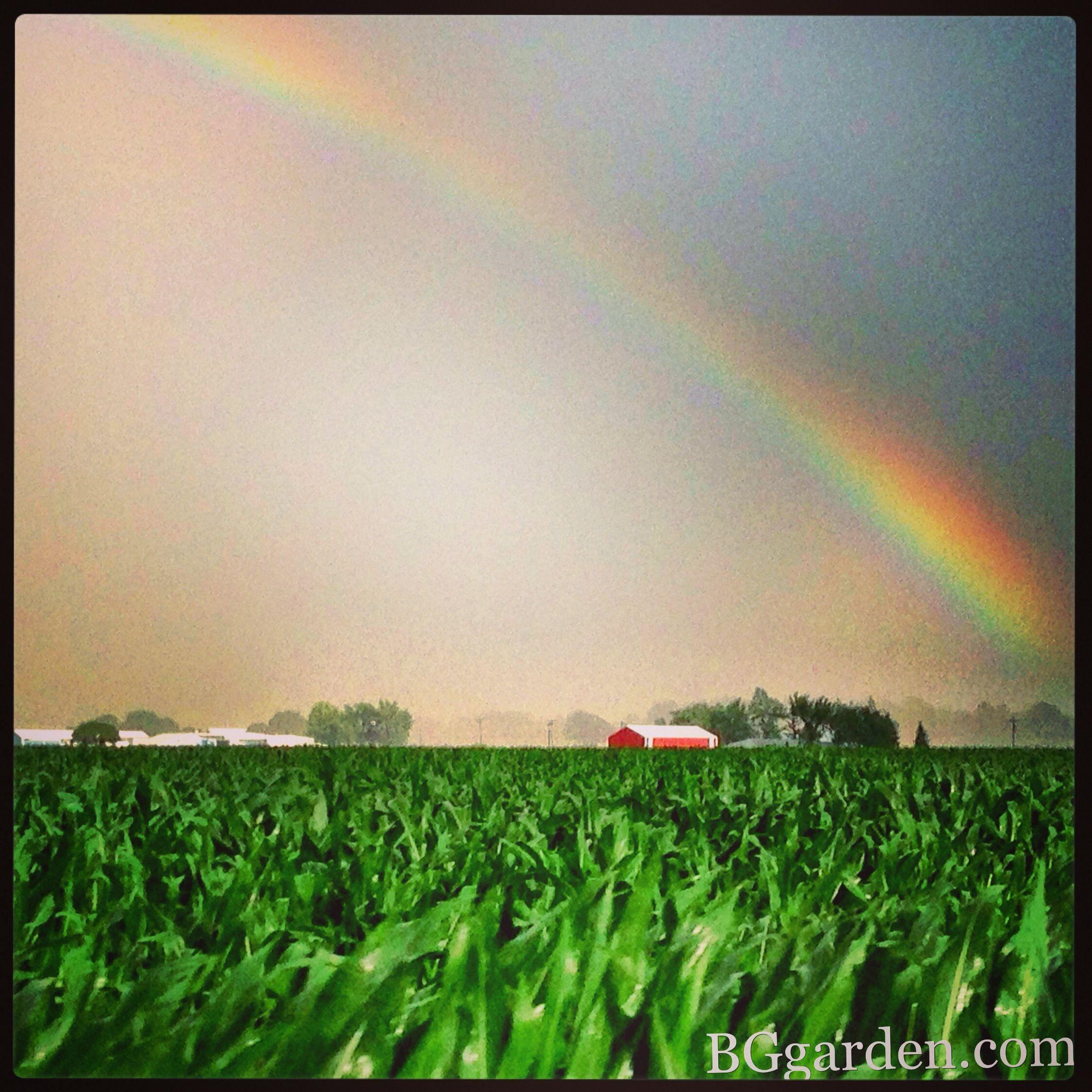 98dfe0552ad4cd4a66760962a181086e Verwunderlich so where Over the Rainbow Dekorationen