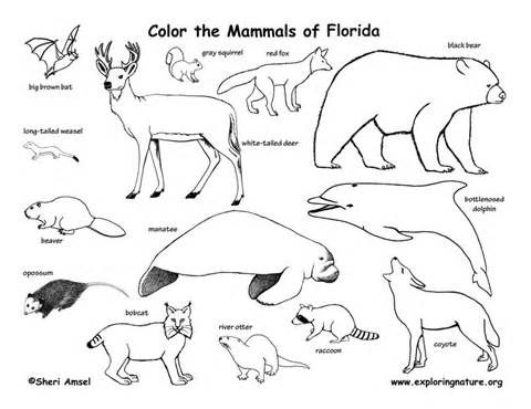 Free Coloring Pages Of Swamp Habitat Animal Habitats Mammals