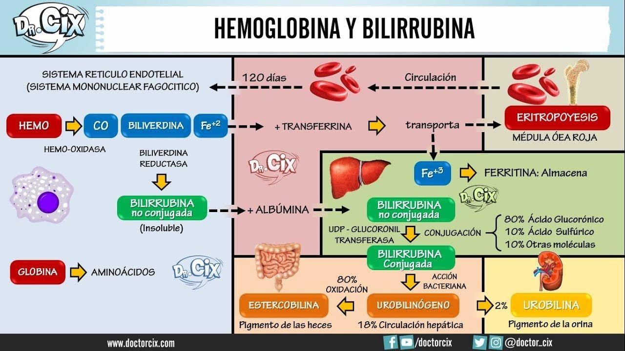 Integracion del metabolismo