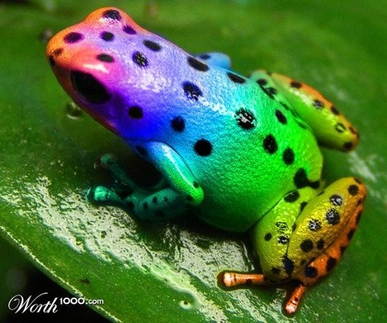15 Animals That Took The Definition Colors Of The Rainbow Literally Frog Cute Frogs Frog And Toad