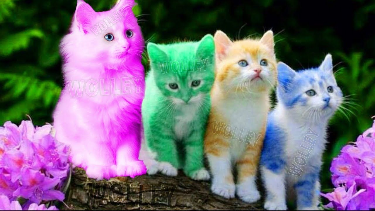 Cute Kitten Cat Colorful Learning Color Video For Kids Funny Educational Videos For Kids Toddlers Virals Videos Rainbow Kittens Cute Cats Beautiful Cats