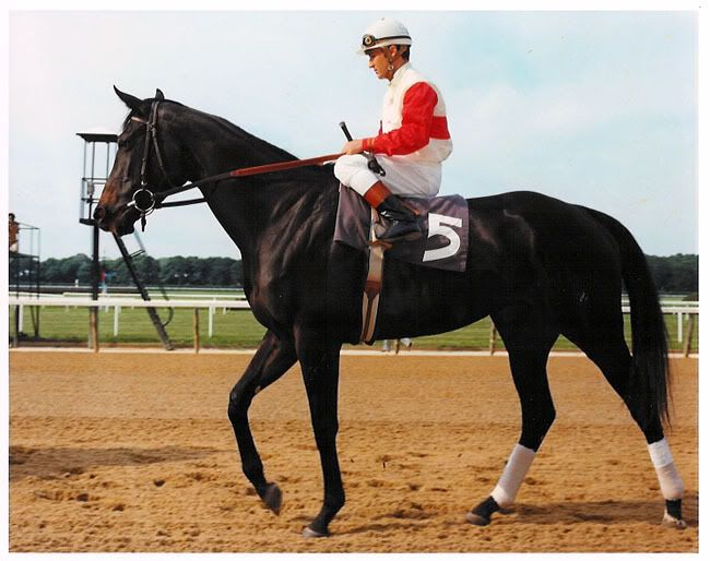 At almost 17 hands tall and jet black, Ruffian is considered by many to be not only one of the greatest race fillies of all time, but one of the best racehorses of of all time. She made a total of 11 lifetime starts, winning all but her final, and ultimately fatal, match race against 1975 Kentucky Derby winner Foolish Pleasure. Prior to her final start, she had won over varying distances had set new or equaled existing track records, and won 1974 Eclipse Award for Outstanding 2 year old…