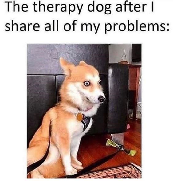 Squirrel-Chasin' Doggo Memes At Your Service (30 Dog Memes)