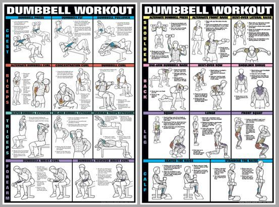 Pin By Debbie Brownlie On Body Building Pinterest Dumbbell Exercises Biceps And Exercises