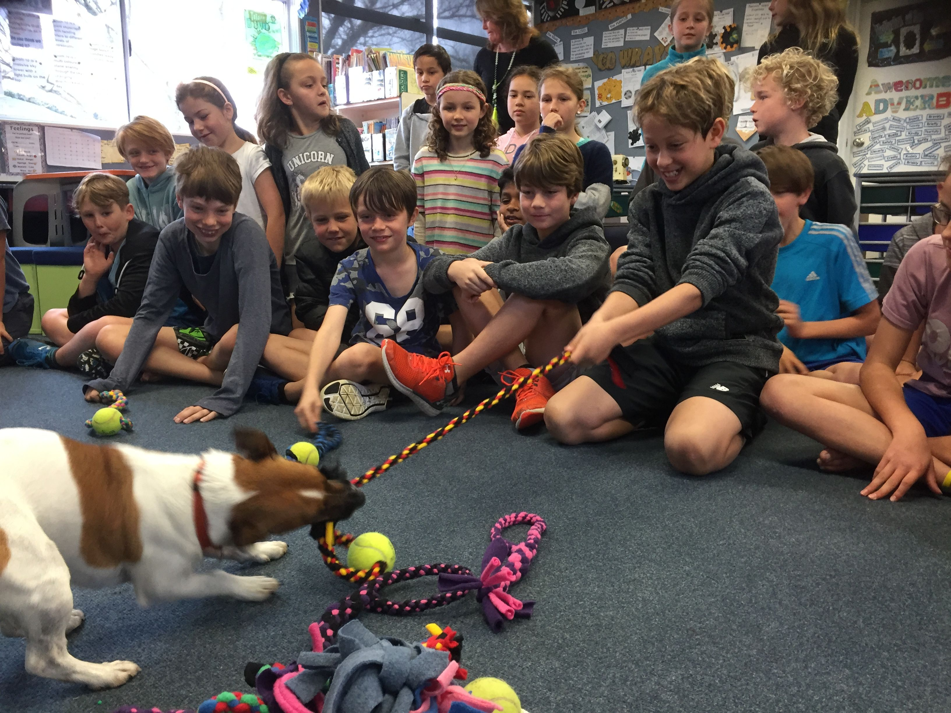 Room 24 And Room 10 From Omanu School Undertook A Joint Project To Make Dog Toys For Dog Shelters Out Of R Dog Rescue Shelters Animal Rescue Ideas Shelter Dogs