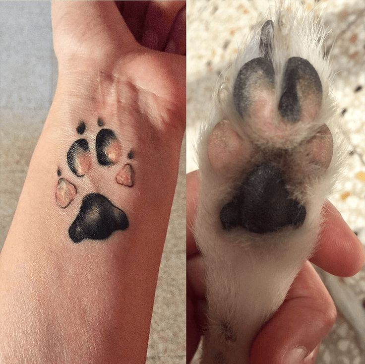 Photo of Top 20 Dog Paw Tattoos to be Appreciated and Admired – Tattoo – #Admired # …