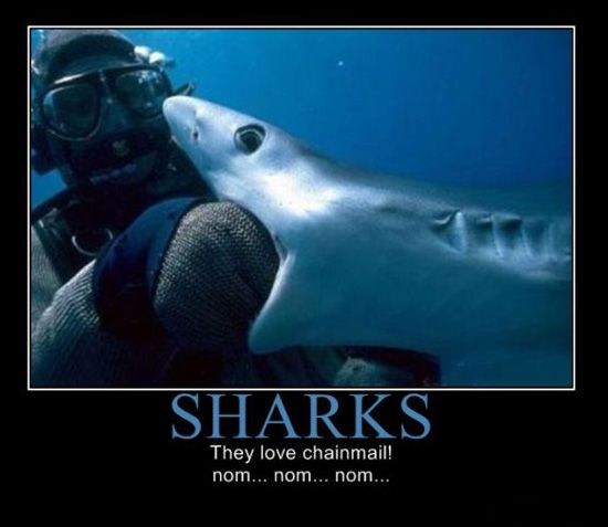 funny sharks | Sharks love chainmail! | LOL | Pinterest ...