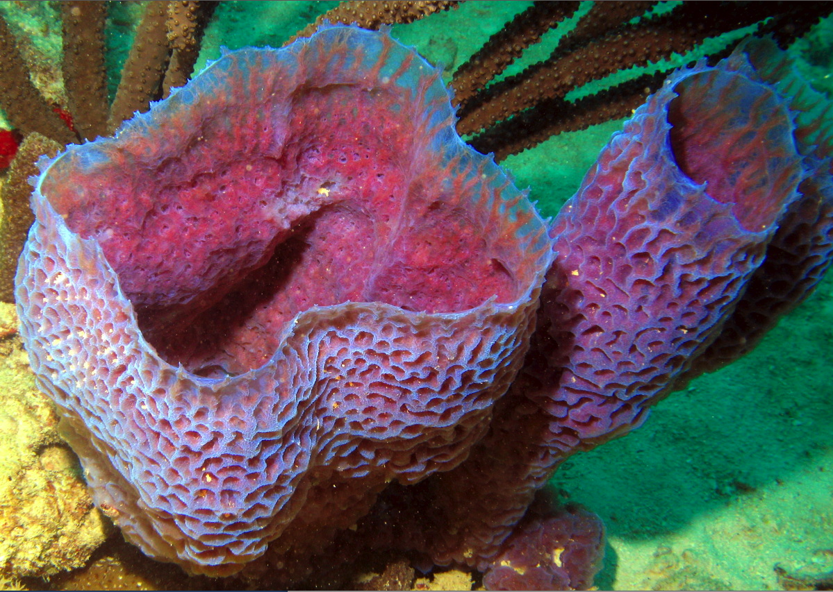 Azure vase sponge by florent charpin diary of a mermaid azure vase sponge by florent charpin reviewsmspy