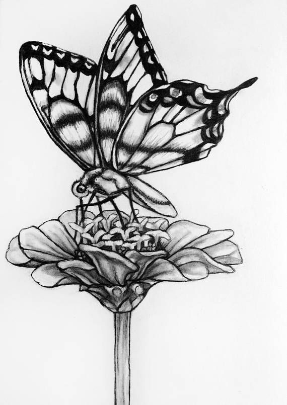Original butterfly flower pencil drawing 71 butterfly