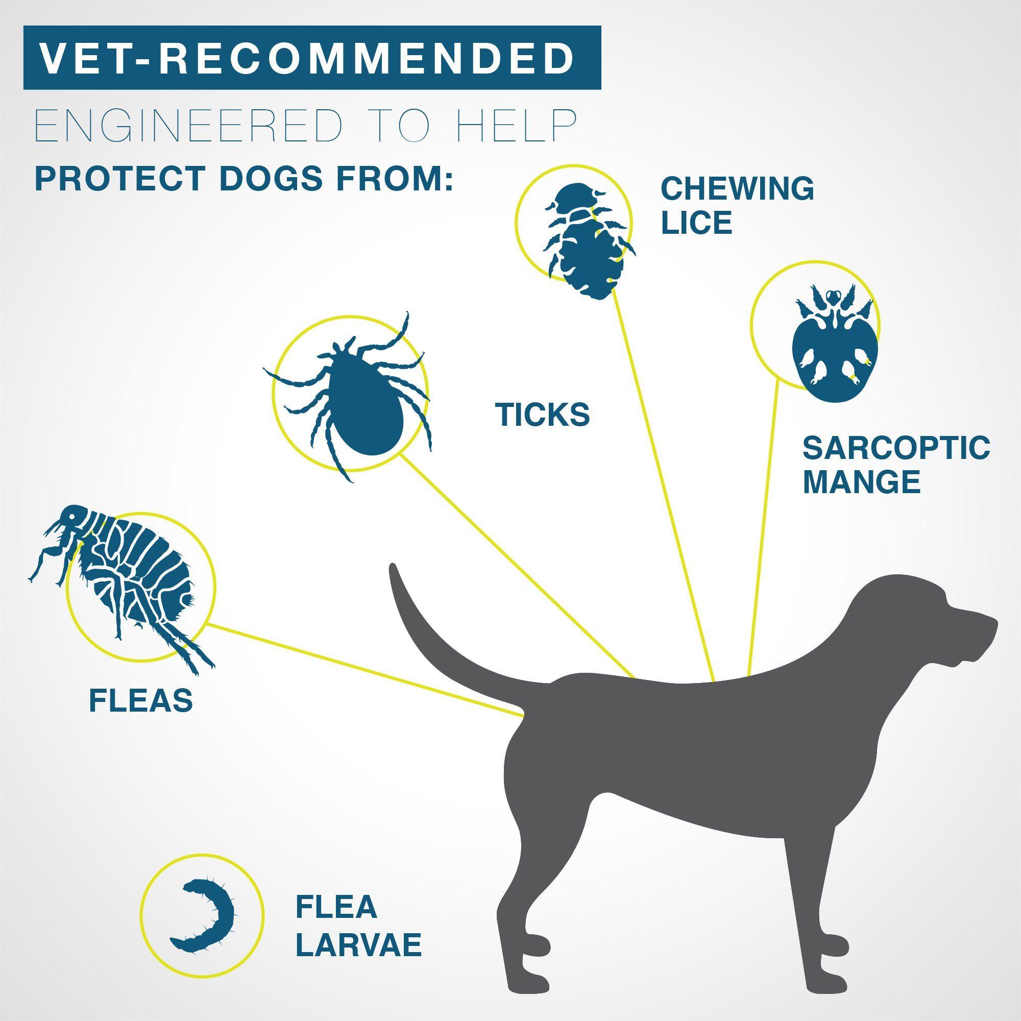 Seresto Flea And Tick Collar For Small Dogs Flea Tick Flea